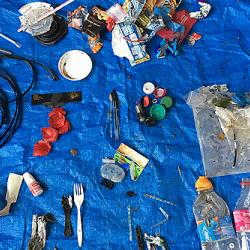 Rubbish collected from Sidgwick site